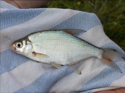 Fotografie k článku Věnujme se lovu bílých ryb